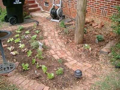 My herb garden, ready to be mulched.